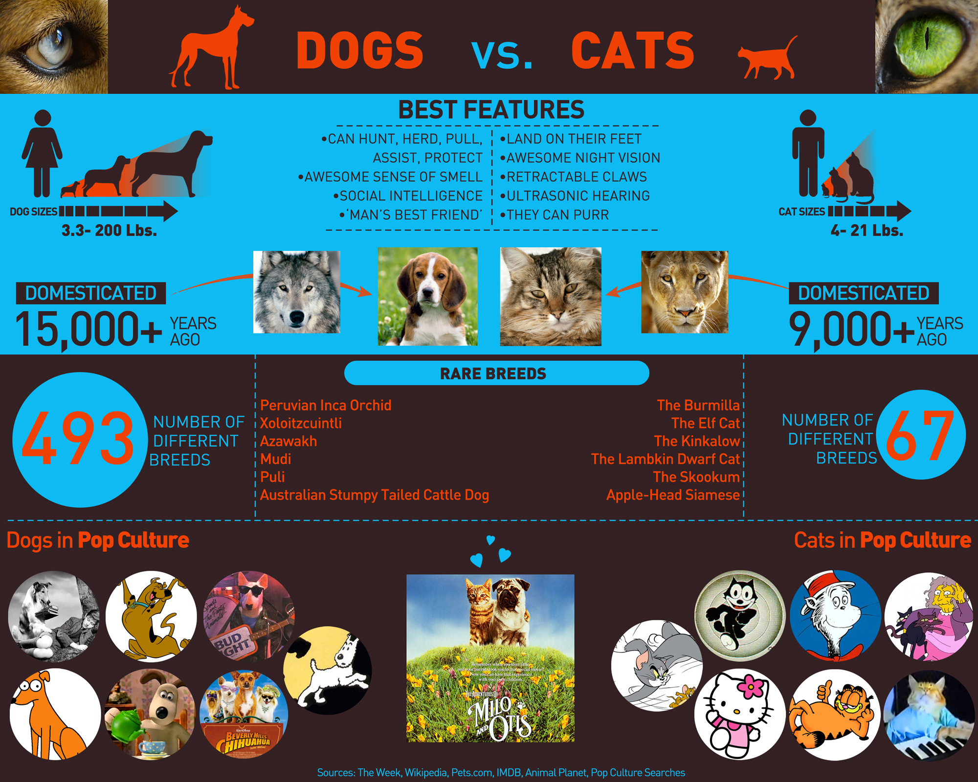 dogs-vs-cats_53bebc2a1749e.jpg