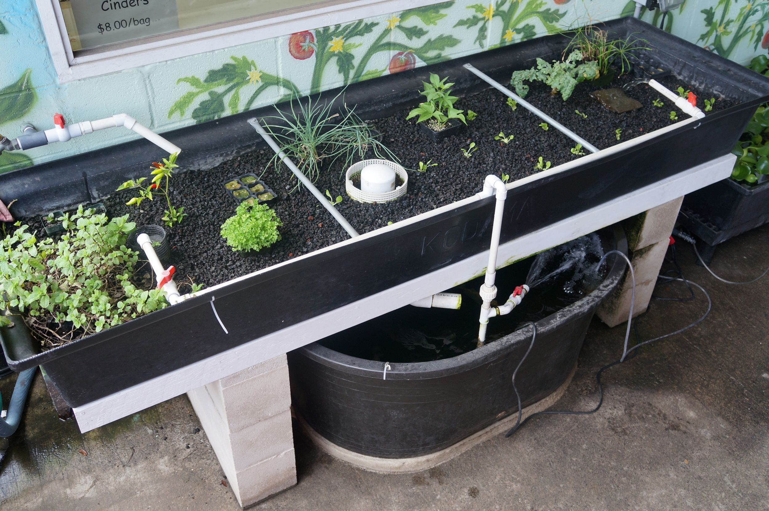 What is    Aquaponics?