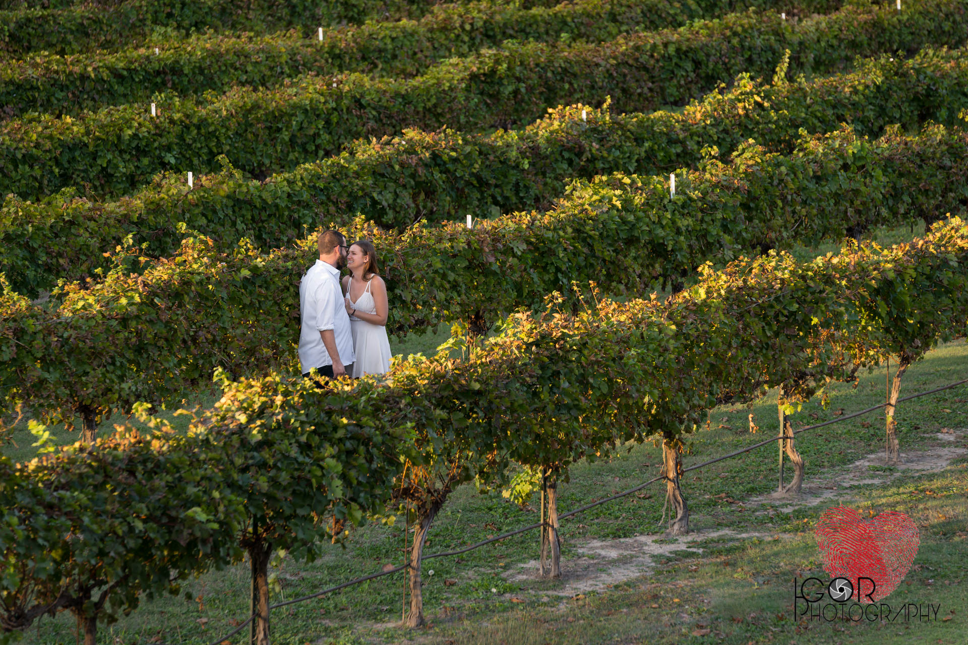 Mitas Hill Vineyard Engagement Session