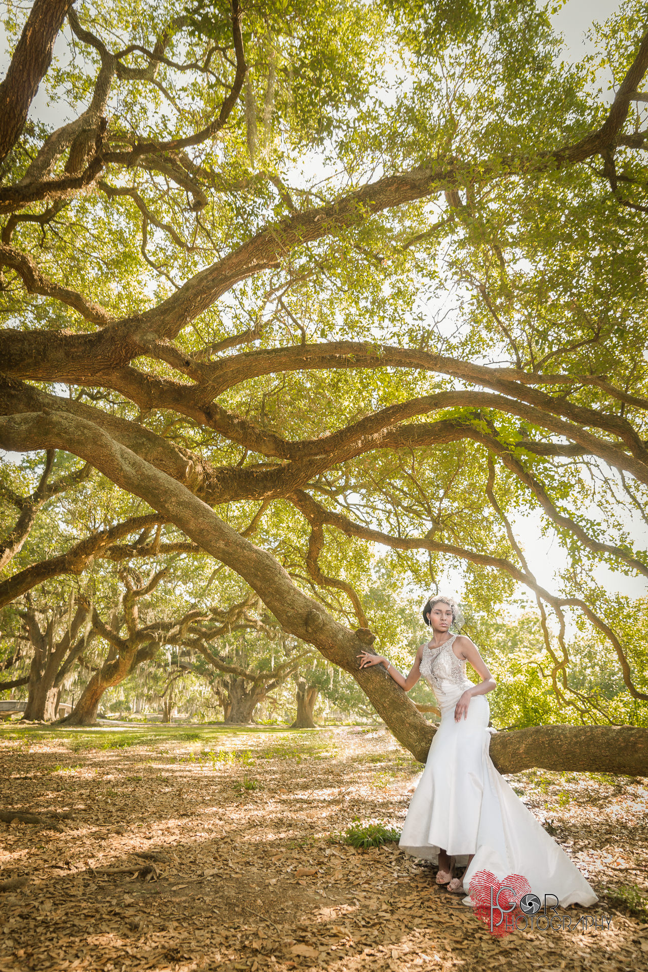 Lousiana Oak trees and bride