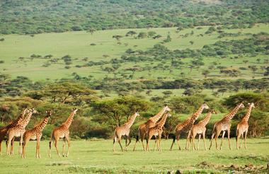 Serengeti 2 8.jpg