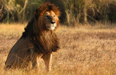 Serengeti 2 17.jpg