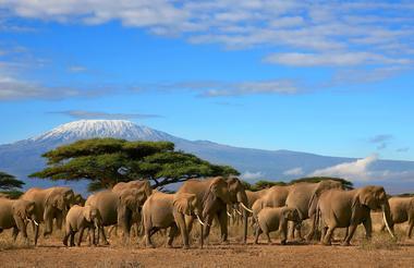Kilimanjaro 2.jpg