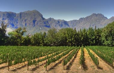 Cape Winelands.jpg
