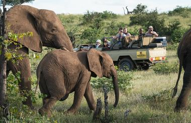 game_drive_-_viewing_of_elephants.jpg
