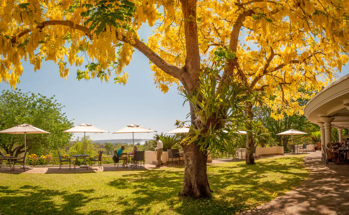 view_of_the_falls_with_laburnum_trees_in_flower_-_ilala_lodge1.jpg