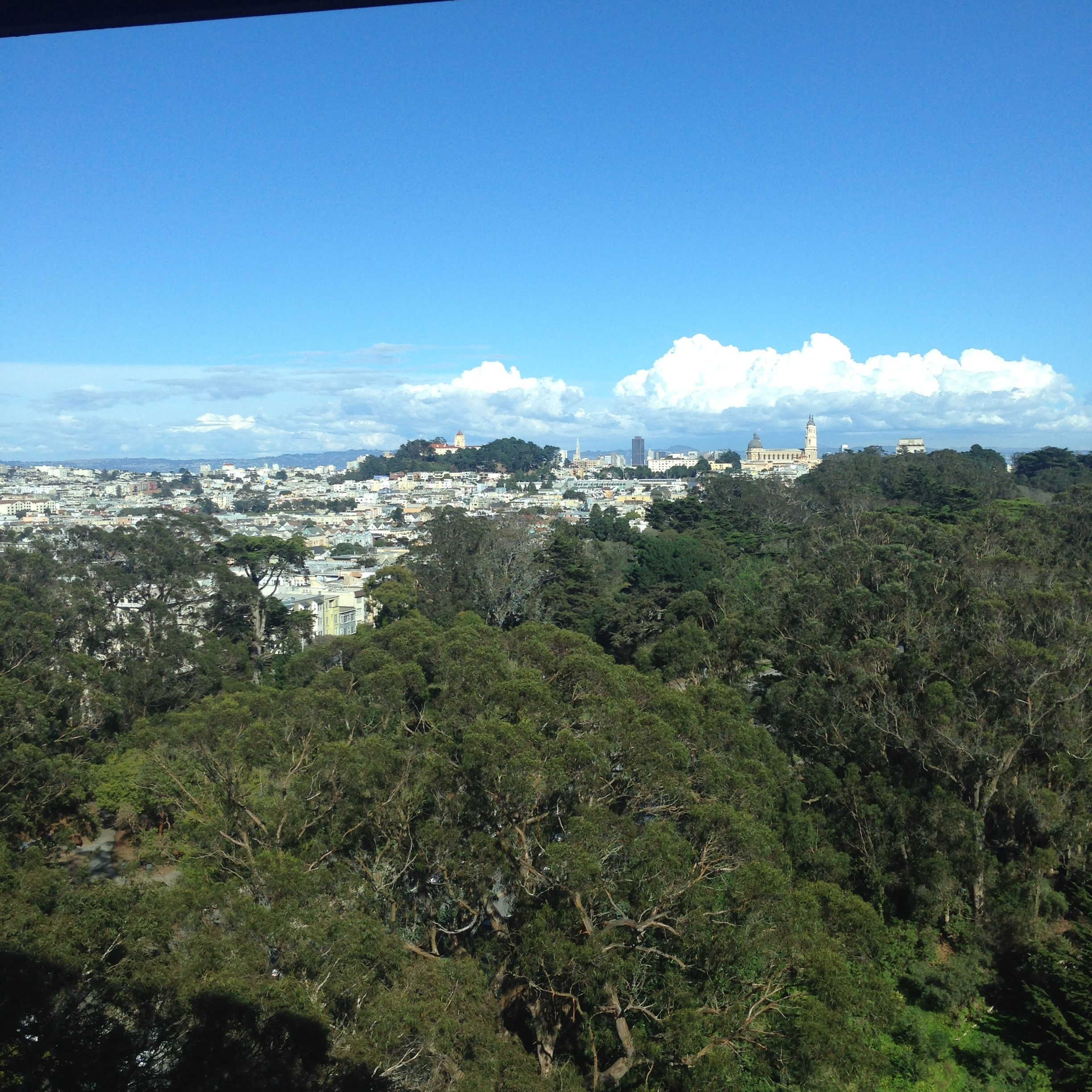 View from the Hamon Observation Tower overlooking Golden Gate Park and The City.