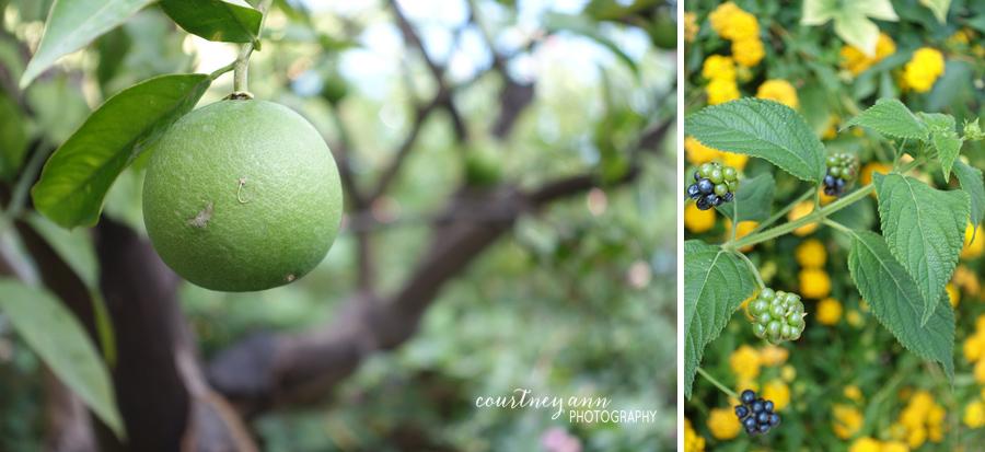 honeymoon_italy_amalfi_lemons