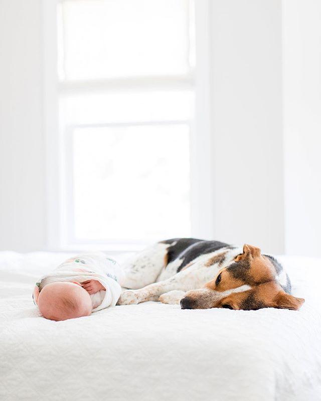 National Dog Day 🐶💖 #newbornphotography #dogsandbabies