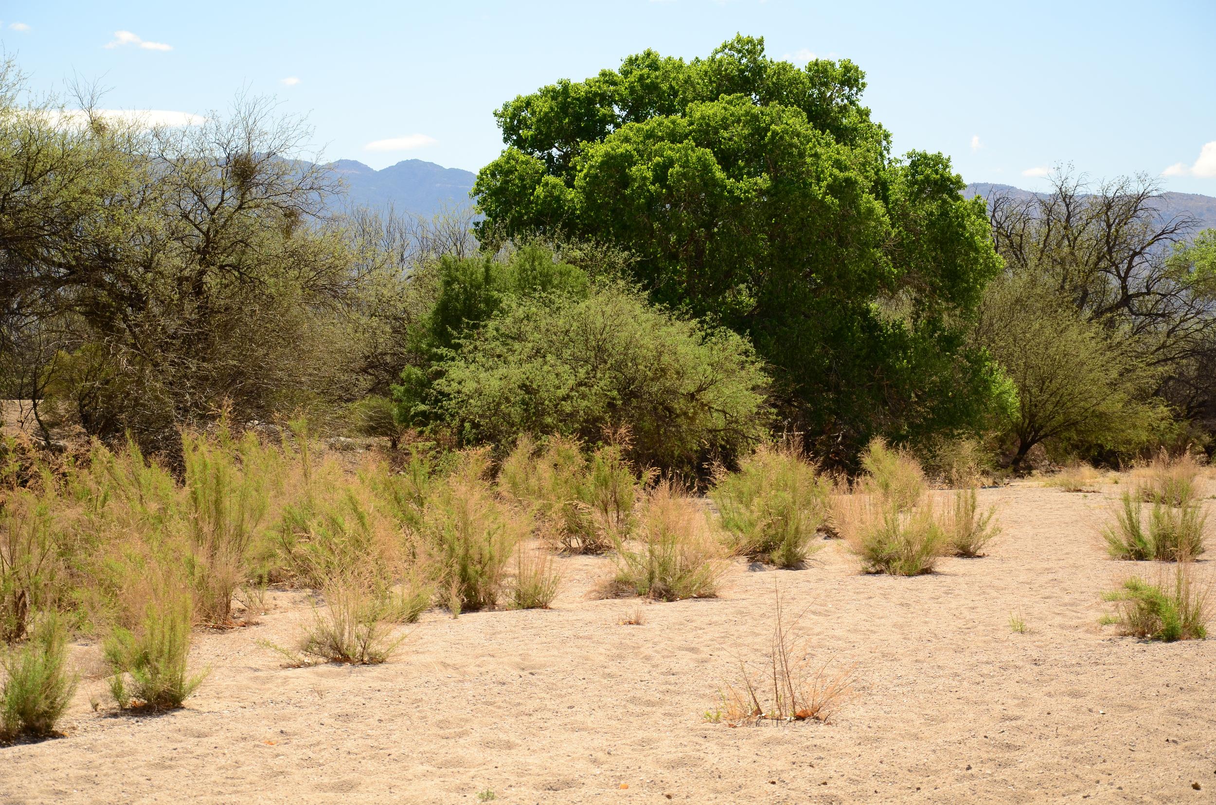 desert-8494-24-of-26_10179541344_o.jpg
