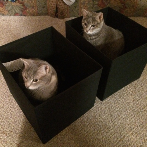 I'll never understand what it is about cats and boxes.