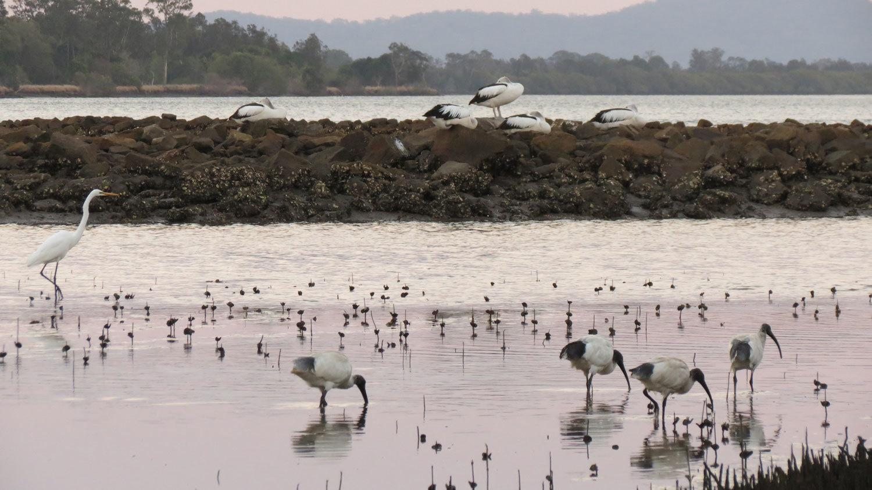 In the tidal Clarence River - abundant wildlife