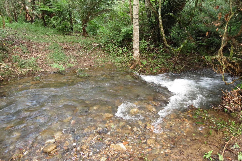 The Creek in Gayle's Garden