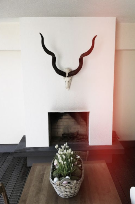 The gorgeous twirl of these horns makes the room