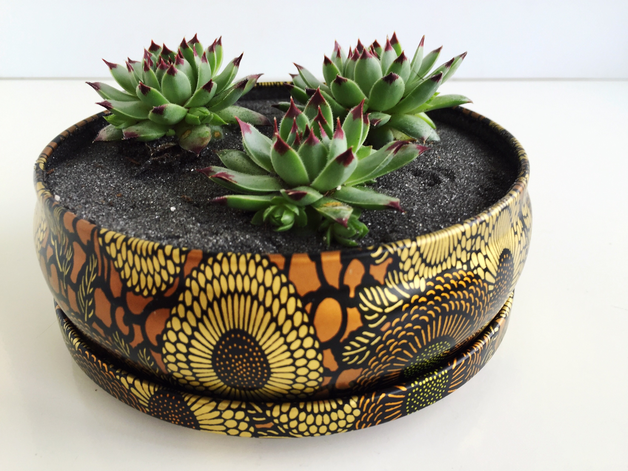 mini succulent garden - upcycled from Anthropologie candle