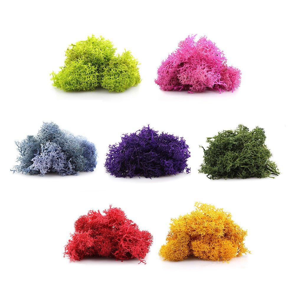 colorful reindeer moss.jpg
