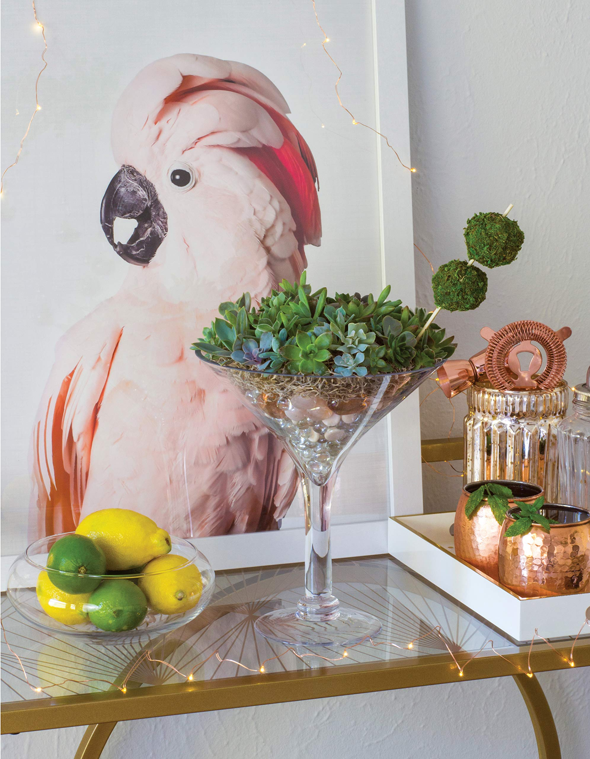 Creative Terrariums Succulent Martini