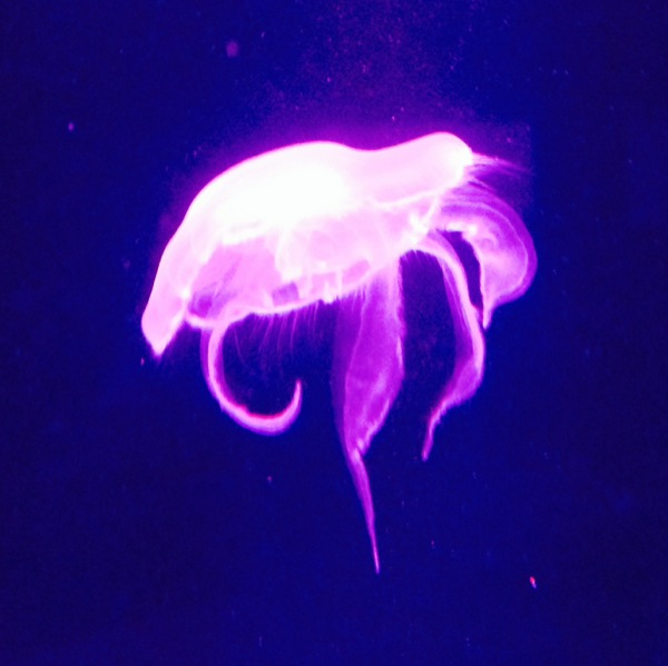 Jellyfish under pink light