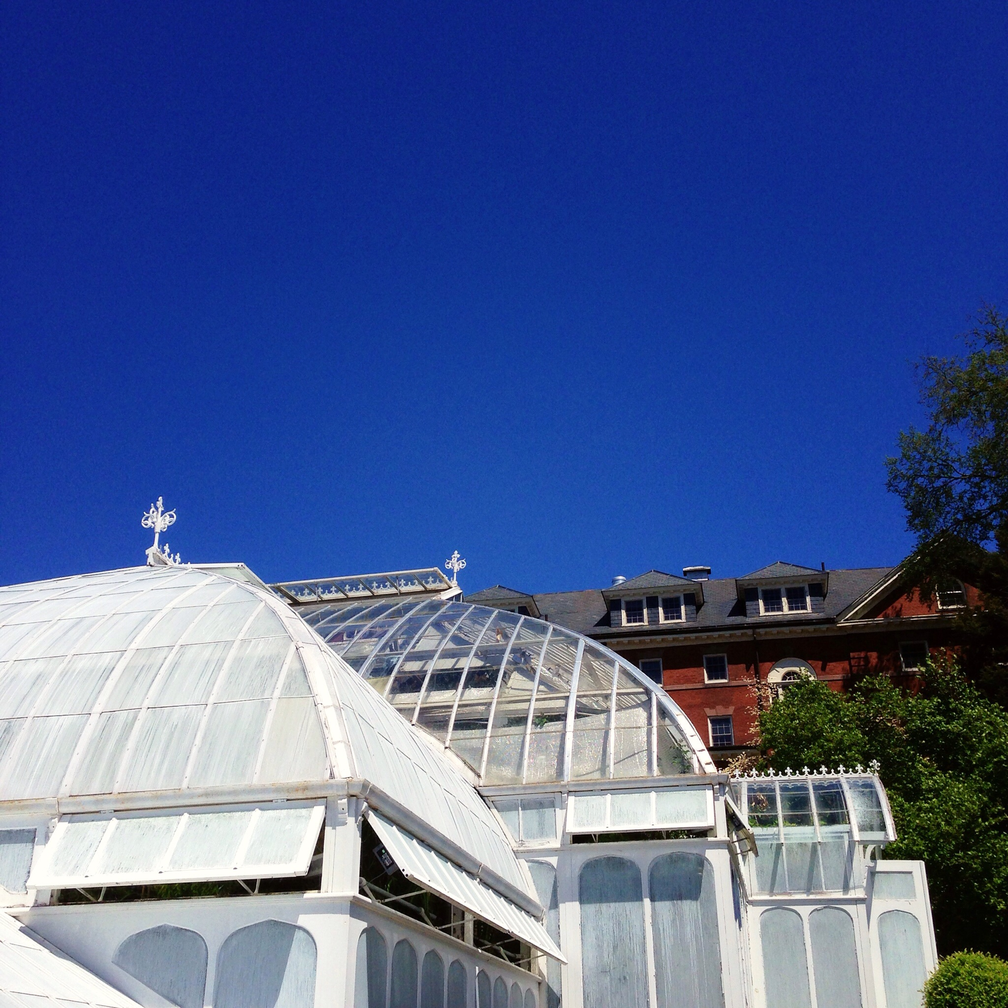 I was so taken by the greenhouse in the Smith College gardens.