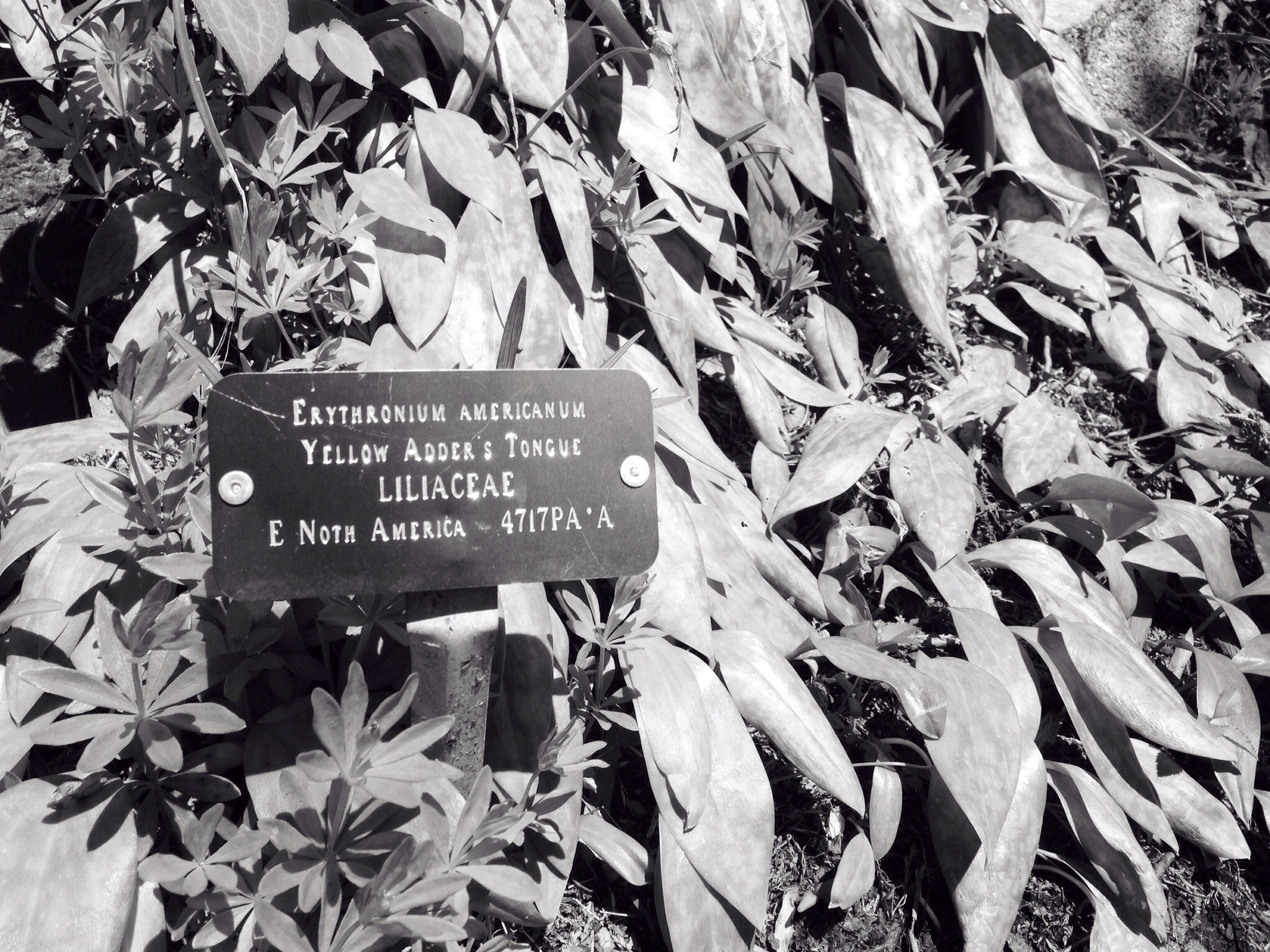 A well-named plant
