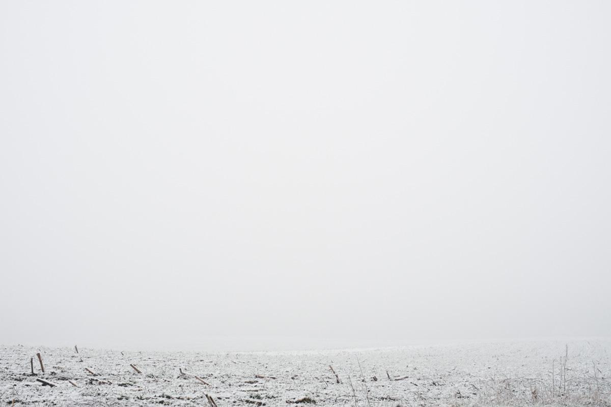 2014-01-26-v-ardini-dland.JPG