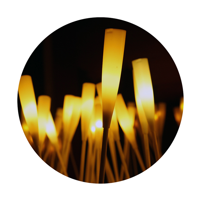 Flaming Reed in Autumn