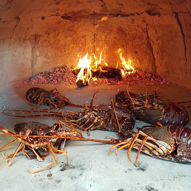 Lobsters getting ready for lunch. Unique experience on island budihovac.. Taste of life.. #waterworldcroatia #dalmatia #croatia #split #Vis #bluelagoon #privateboattour
