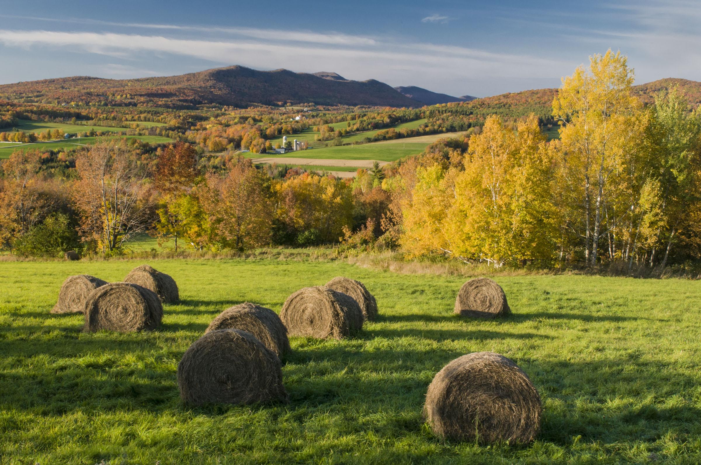 field-haybales.jpg
