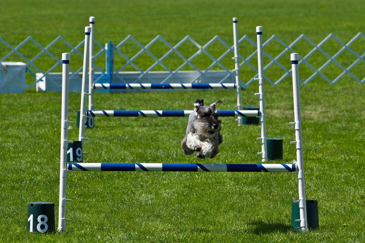 VIEX Dog Agility 2011 (1 of 1)-X2.jpg
