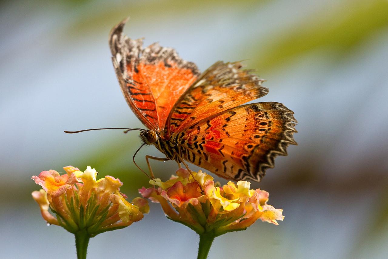 Butterfliy World-1-X2.jpg