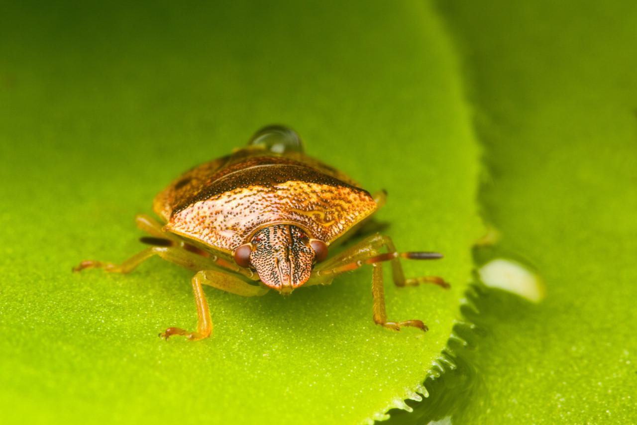 beetle-2-X2.jpg