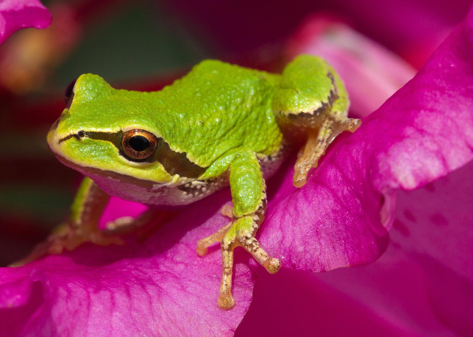 tree frog-X3.jpg