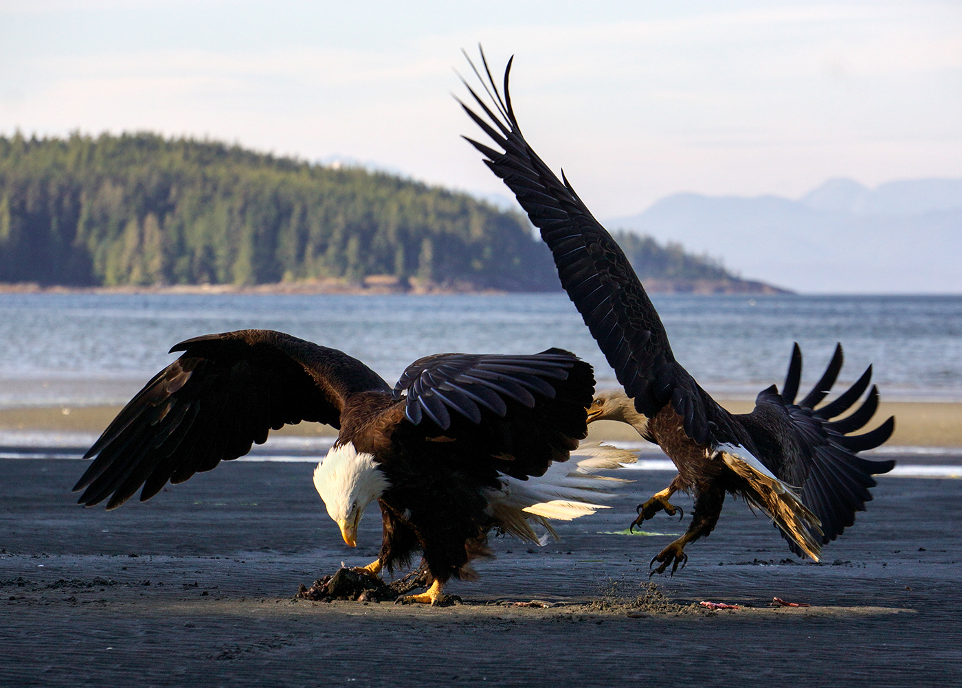 Hardy Eagles-2.jpg