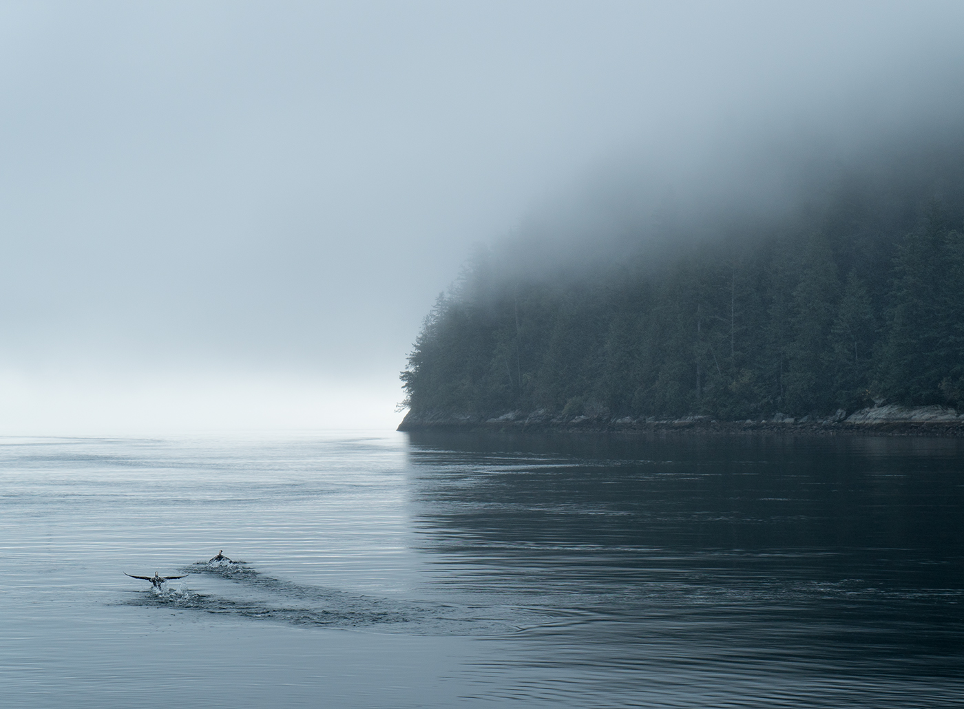 Bute Inlet on the misty west coast of Canada