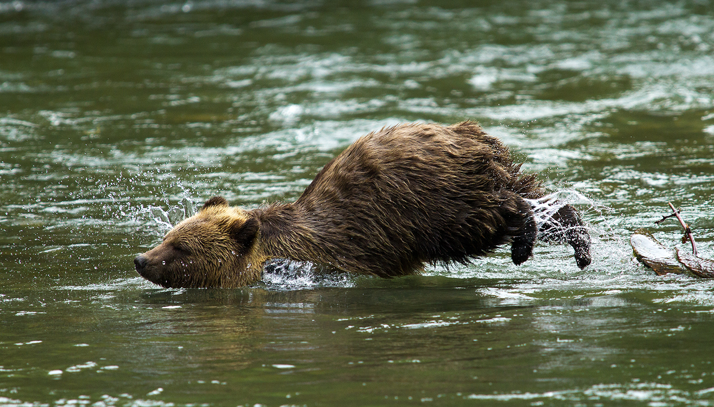 Orferd River Grizzly-0831.jpg