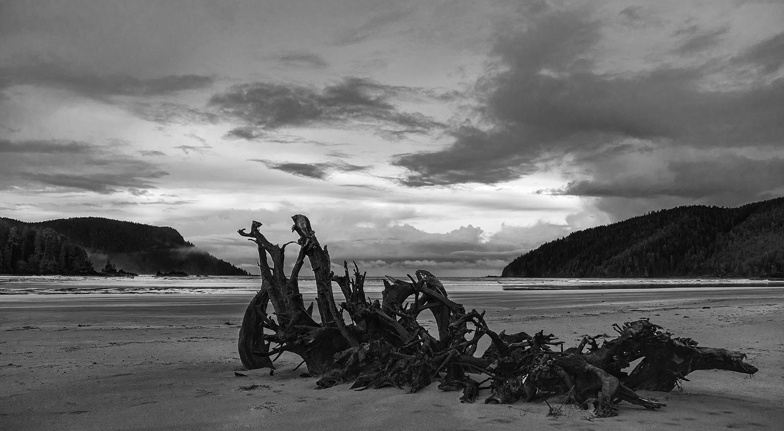 San Josef Bay Skeleton