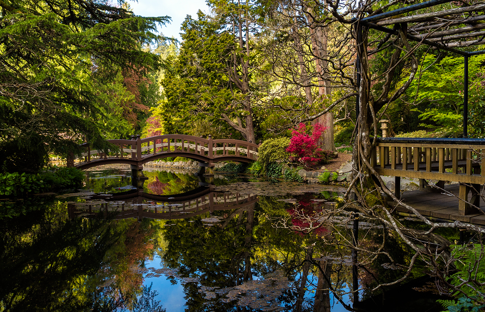 The Japanese Gardens at Hatley Castle