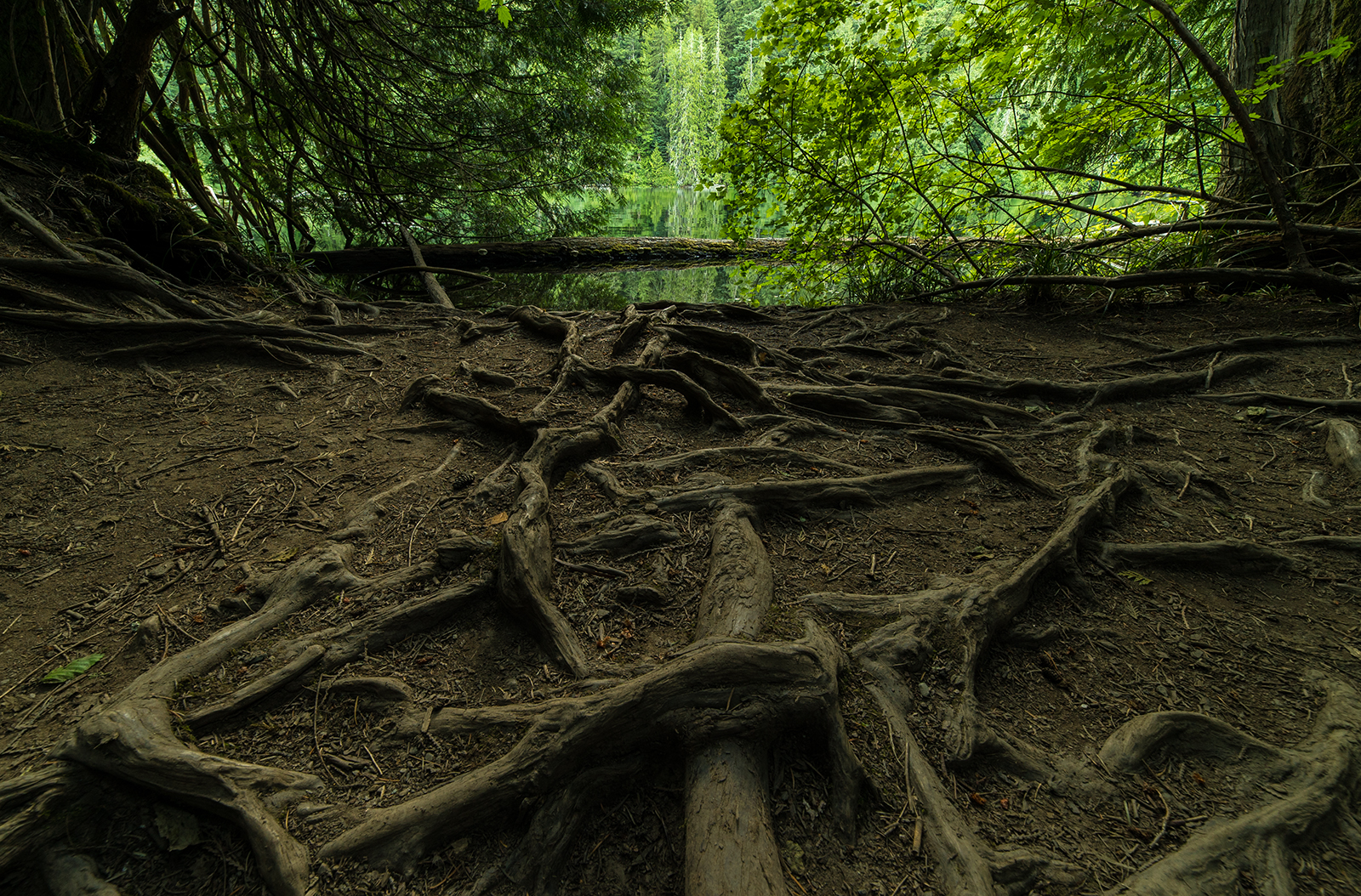 Cathedral Grove forest floor