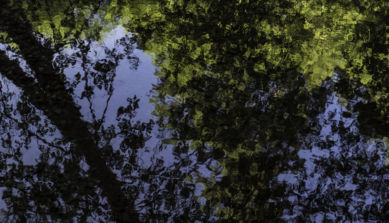 cameron reflections.jpg