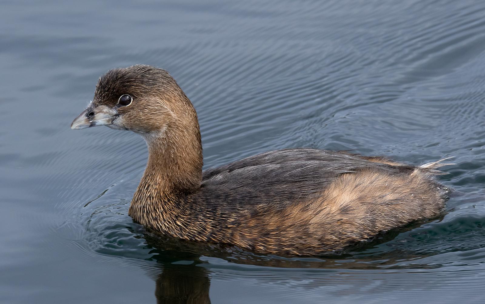 French Creek Sea Bird.jpg