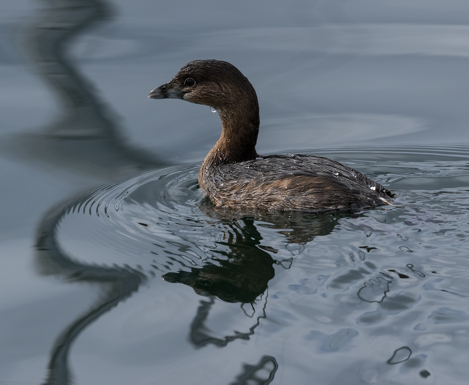 French Creek Sea Bird 2.jpg