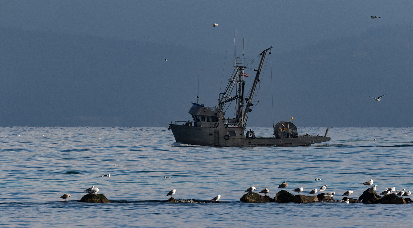 A Seiner cruises by French Creek in search of spawning herring