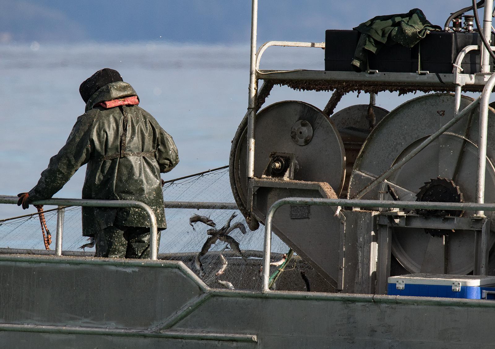 Fisherman on Gillnetter off Parksville