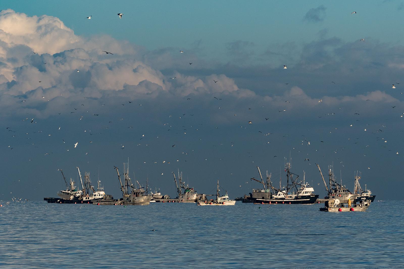 The Herring Fleet in Parksville Bay at dawn