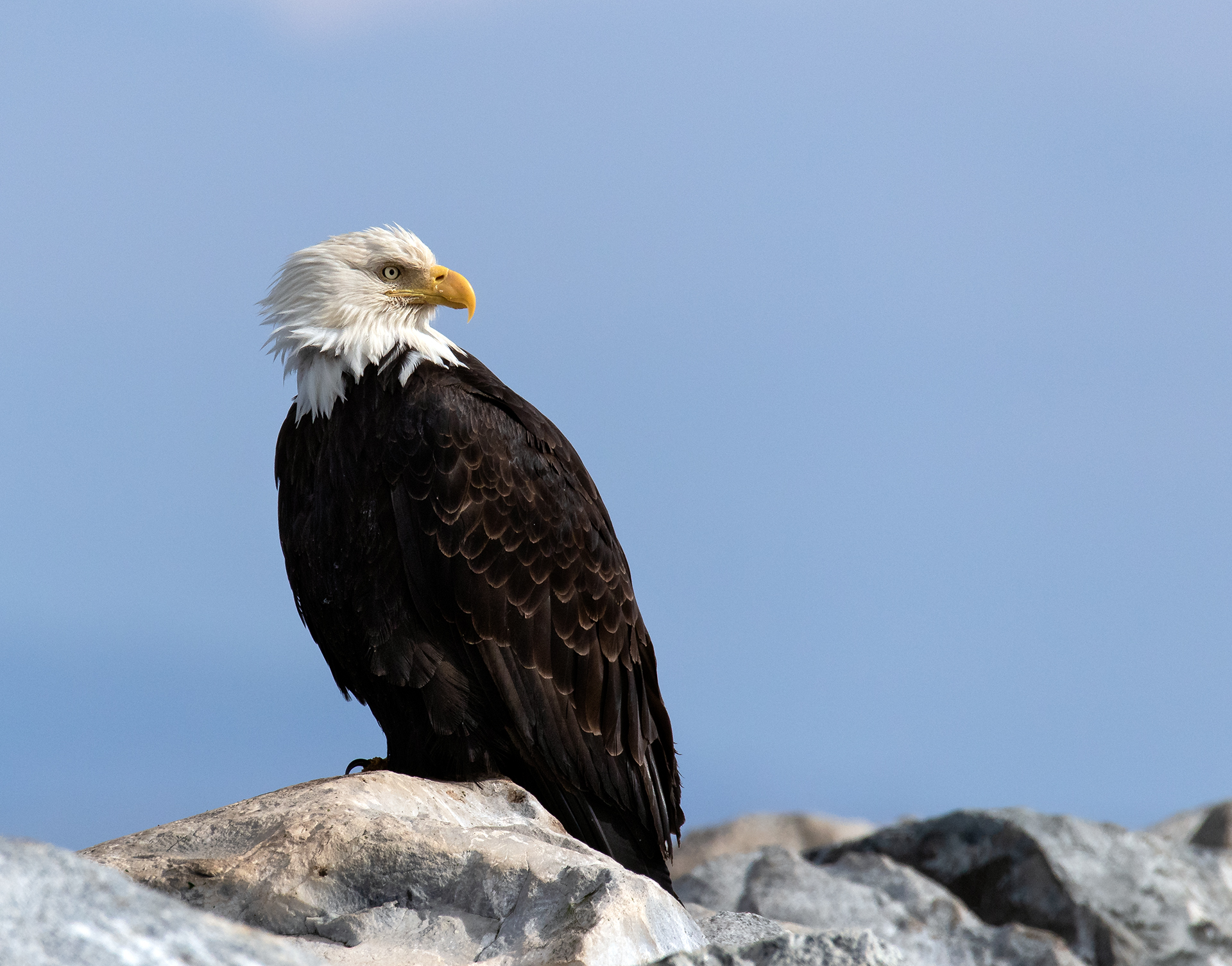 French Creek Eagle 003.jpg