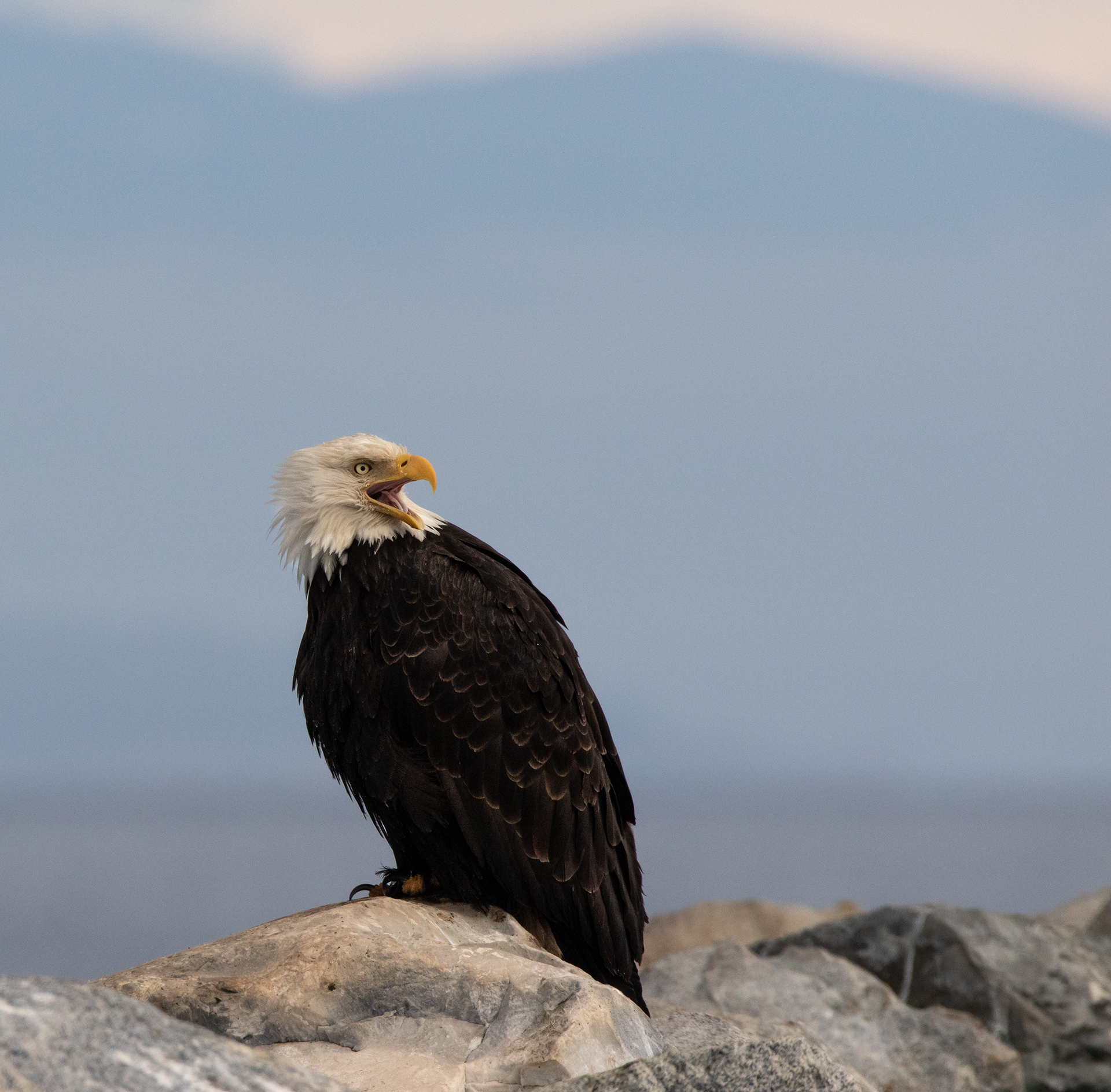 French Creek Eagle 007.jpg