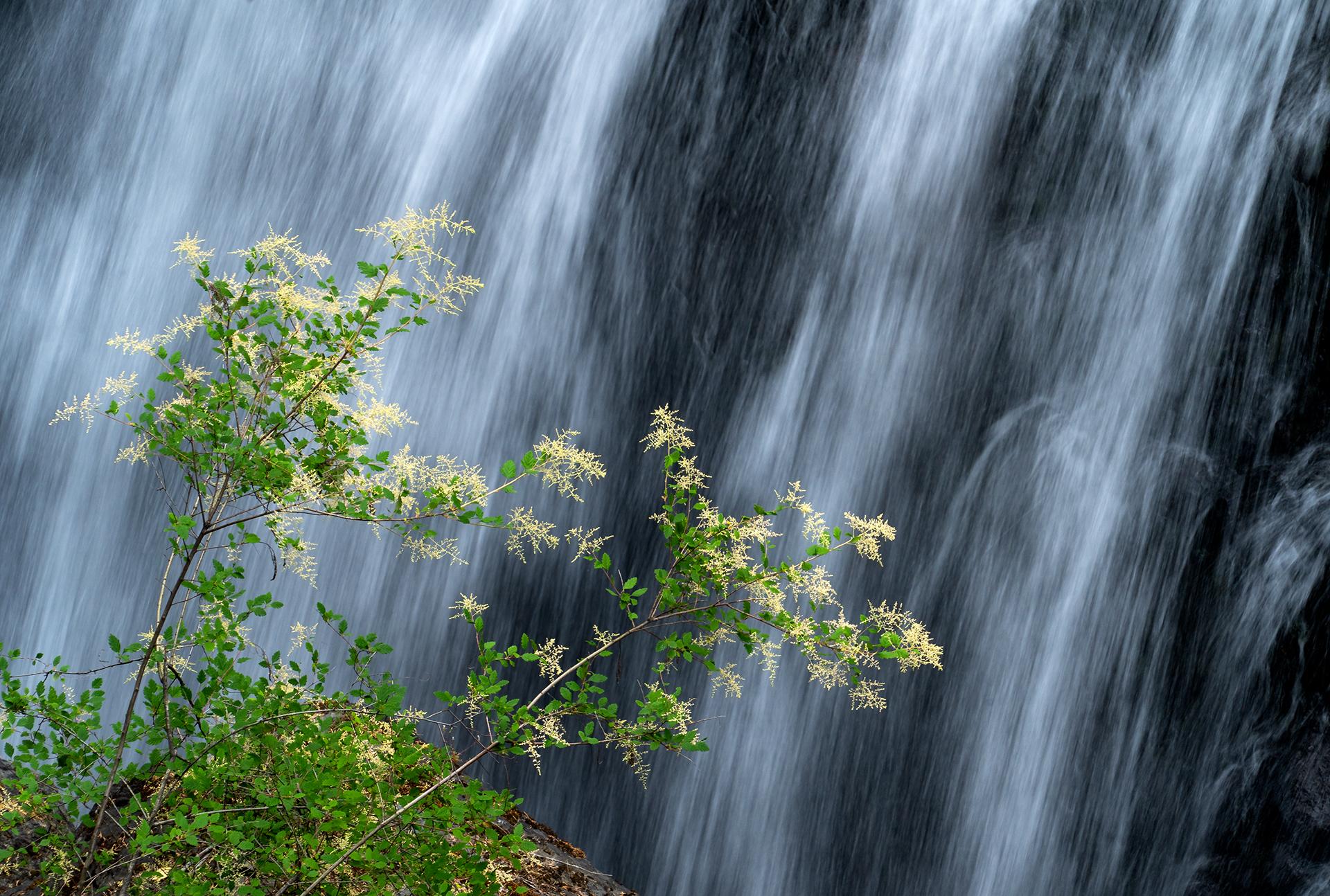 Flower Falls.jpg