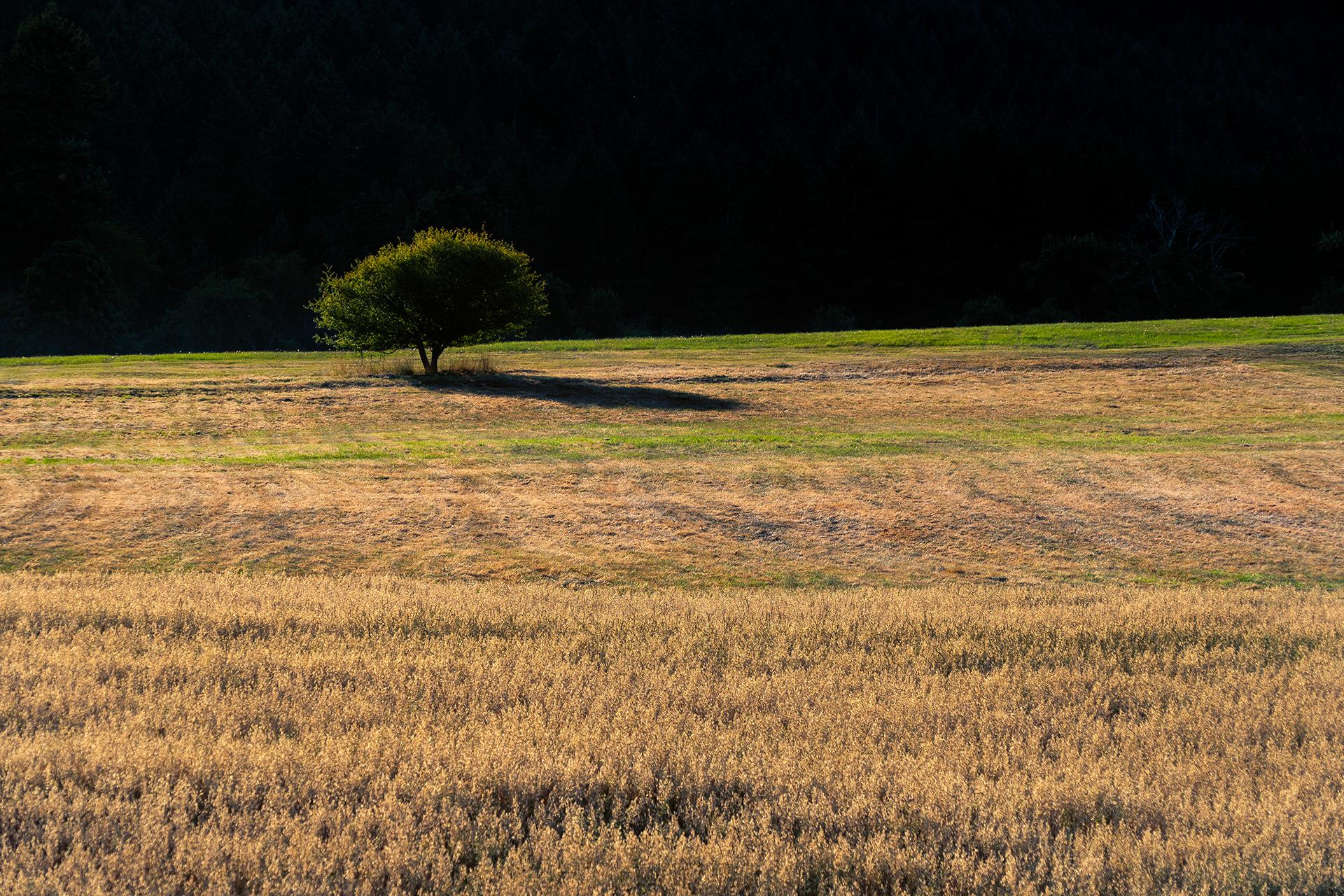 Field Against A Mountain
