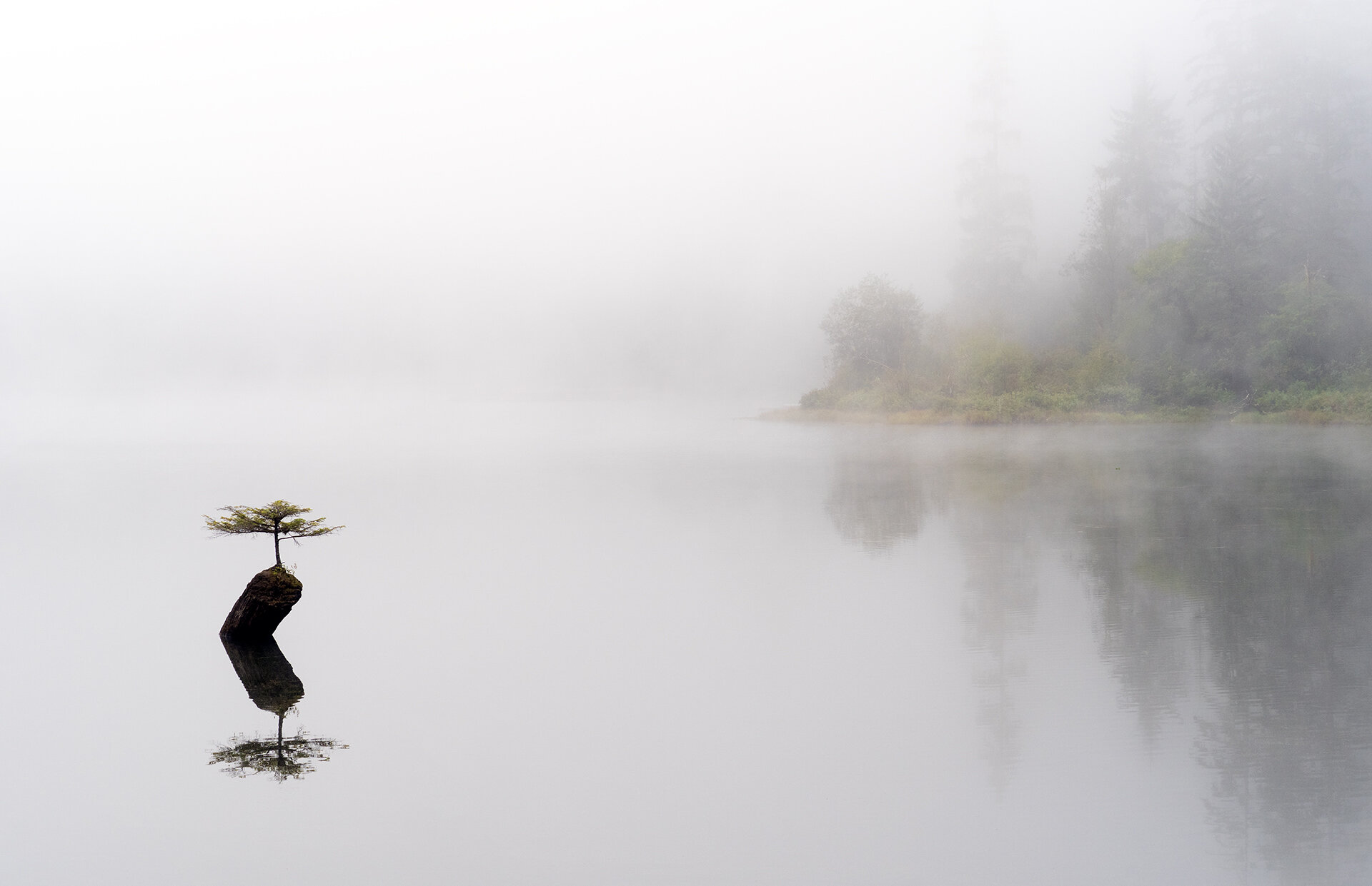 Fairy Lake Fog.jpg