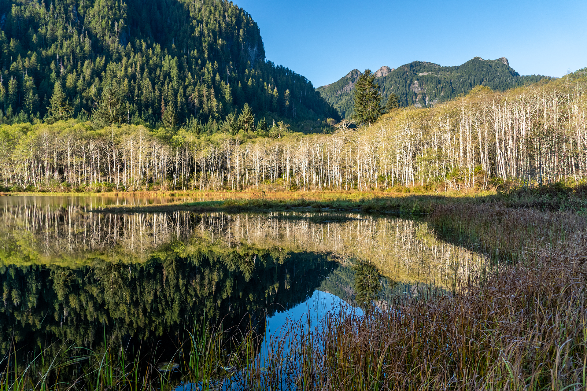 Malaspina Lake Reflections